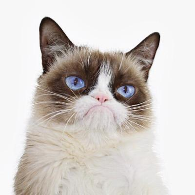 Товары для котят и кошек