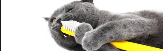 Гигиена и уход за кошкой