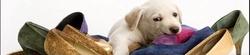 Корректор поведения для собак