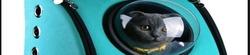 Аксессуары для улицы и автомобиля кошка