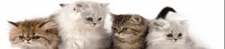 Уходовые средства для котят