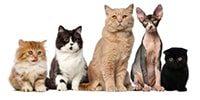 Товары для кошек и котят