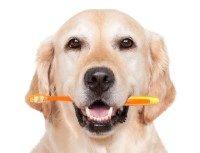 гигиена и уход за собакой