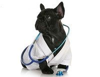 витамины и ветпрепараты для собак и щенков
