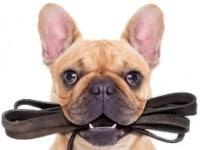 поводок, ошейник для собаки