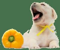лечебный корм для собак и щенков