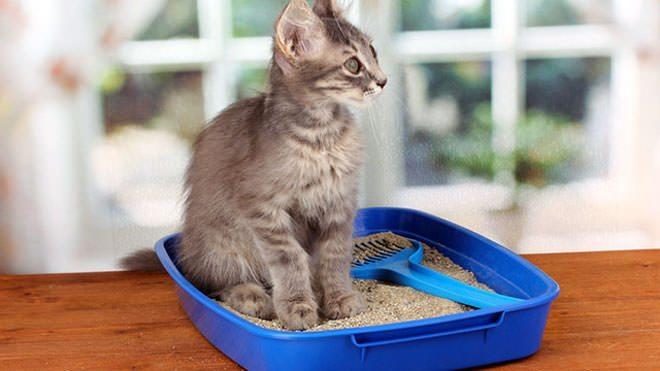наполнитель для кошачьего туалета Зоокетдог интернет магазин зоотоваров