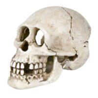Грот для аквариума, череп Трикси TX-8713 (Trixie), 15 см