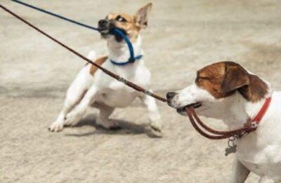 Как выбрать рулетку для собаки